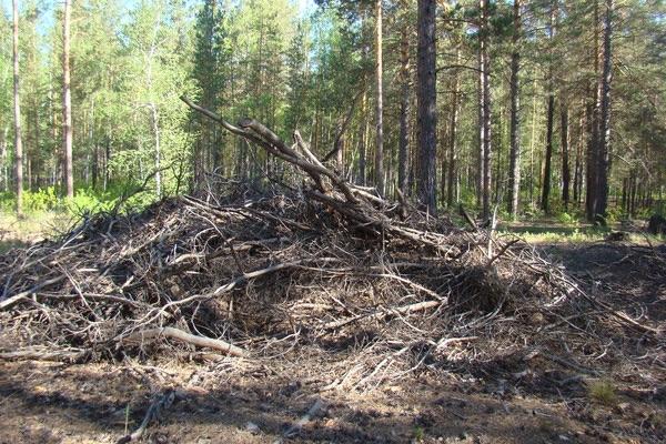 Бесхозяйственность в лесу, вырубка леса