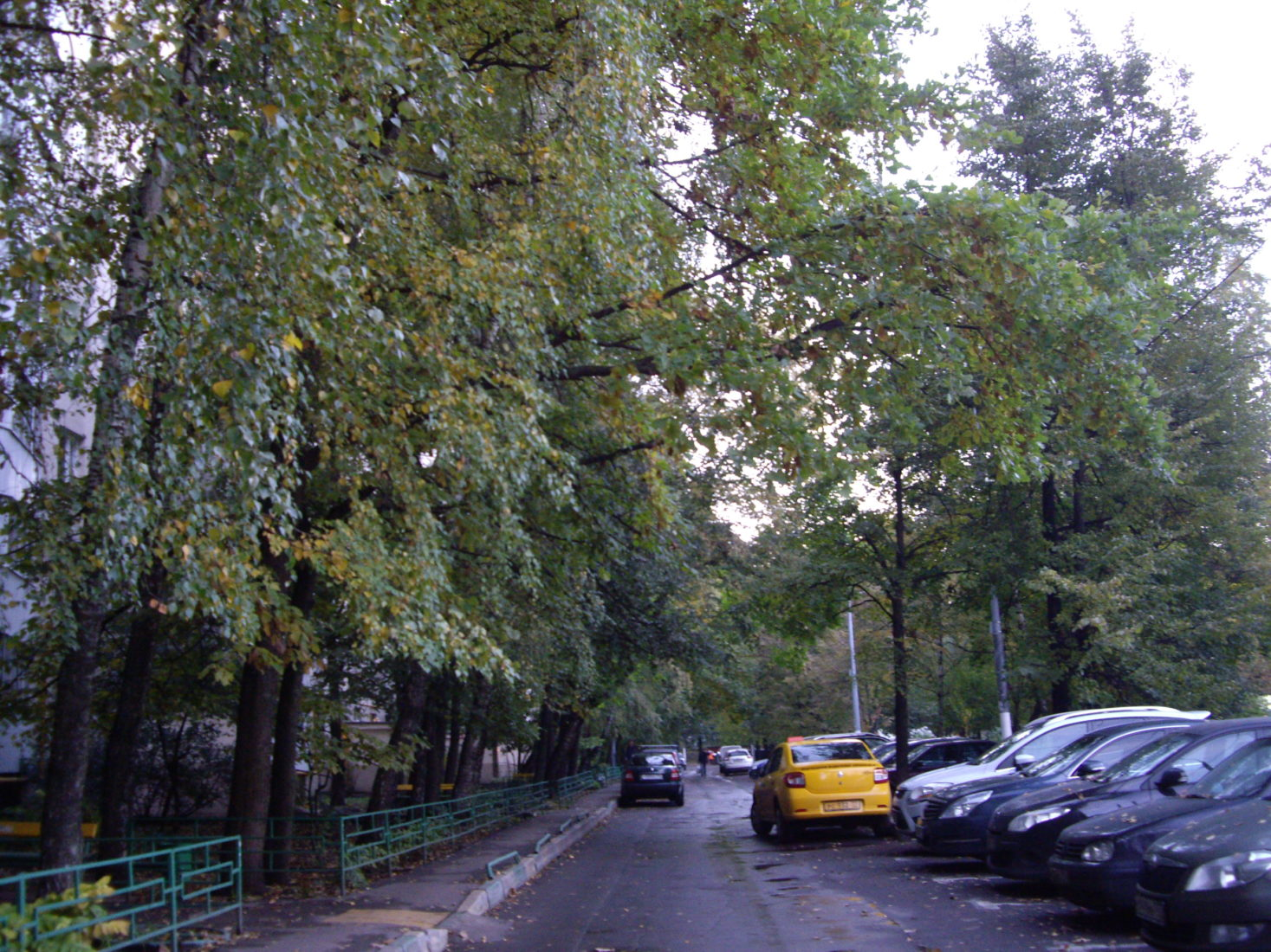 О кронировании деревьев